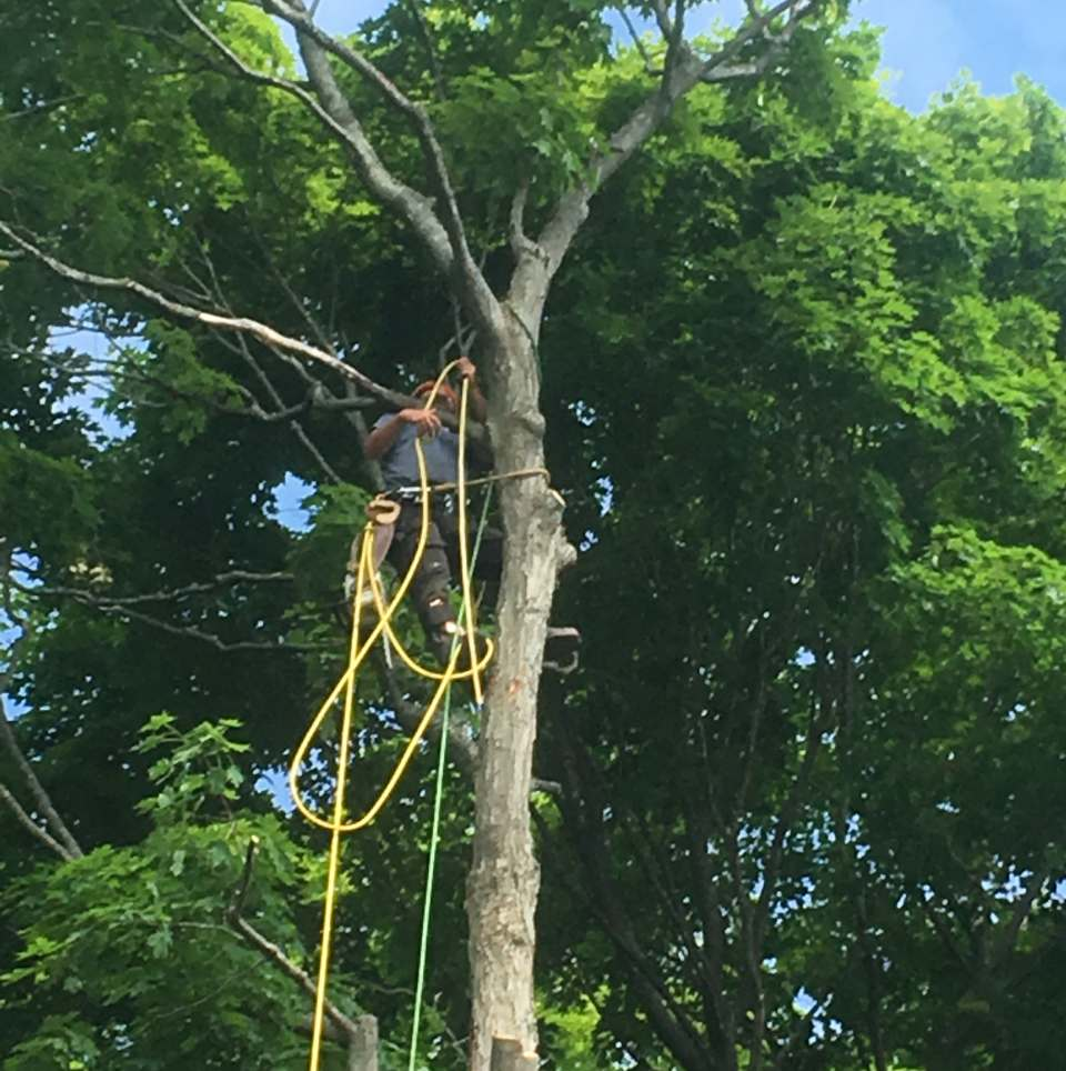 man attaching a harness to tree