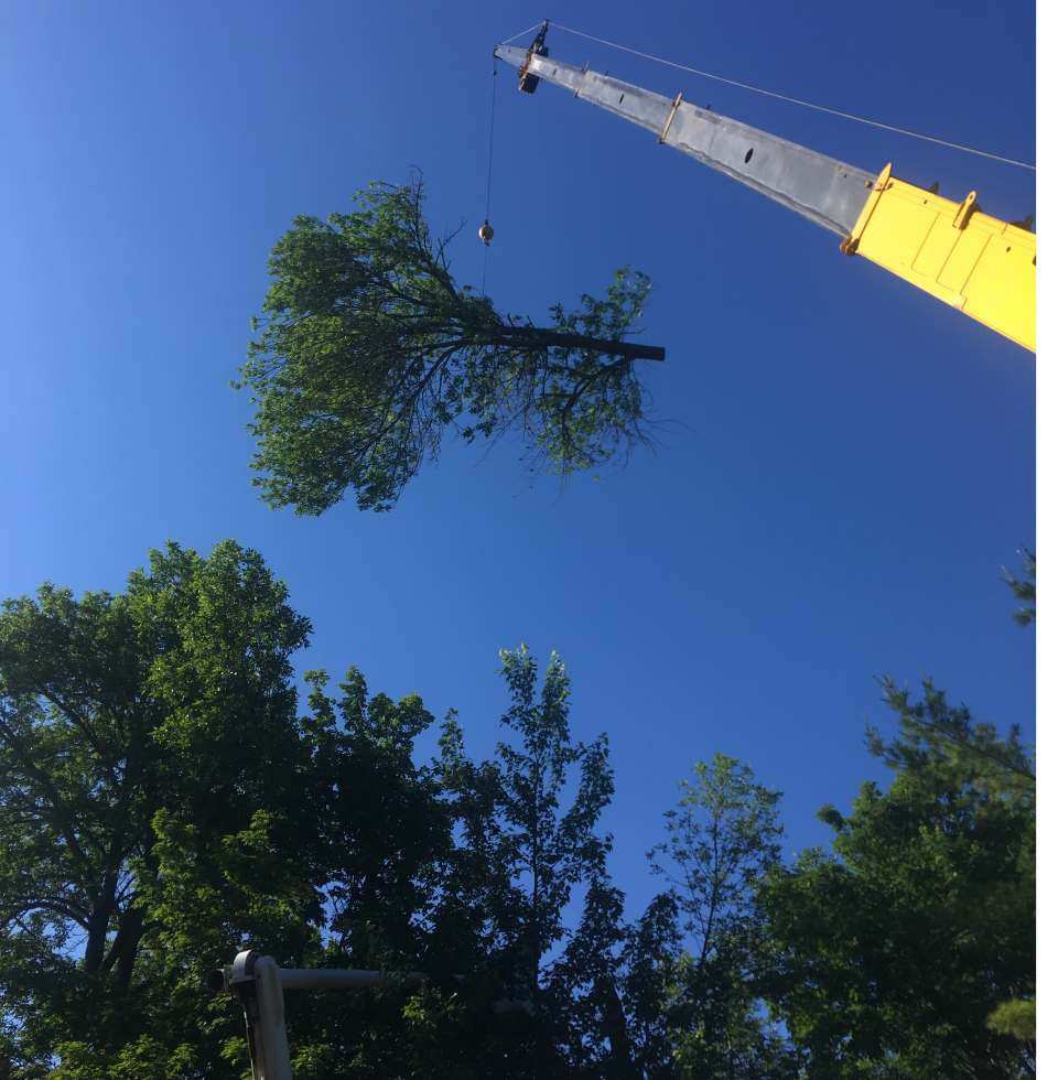 crane being used to remove cut tree