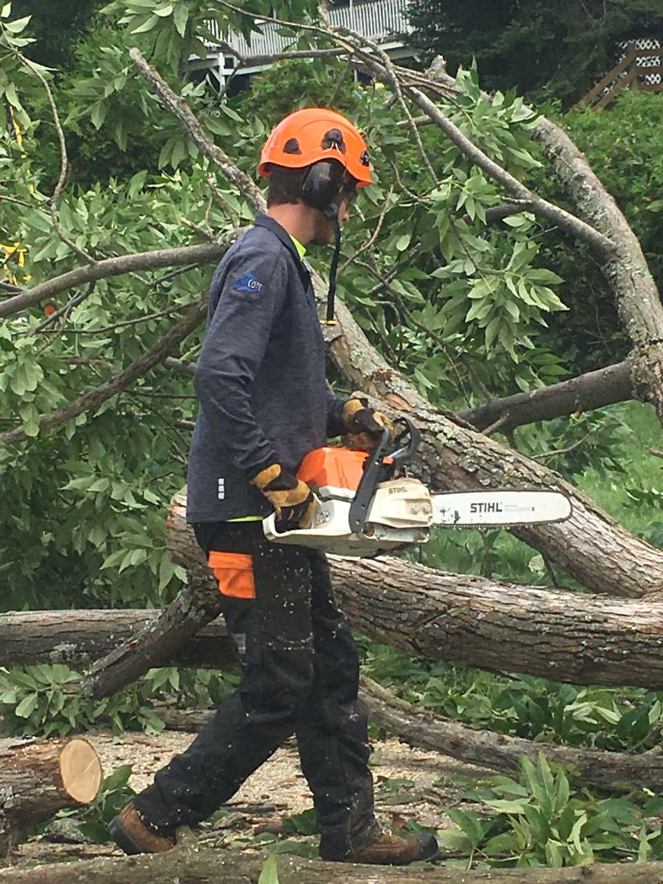 man cutting a tree with the help of chain saw